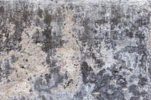 Vlhkost v domě, jak postupovat při odstranění plísně ze stěn