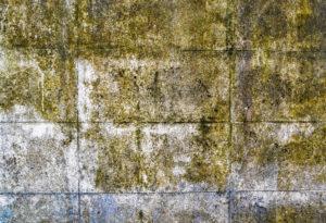 odstraňování plísení a řas ze stěn Praha 4