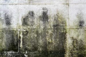 odstraňování plísní ze zateplených fasád Praha 4