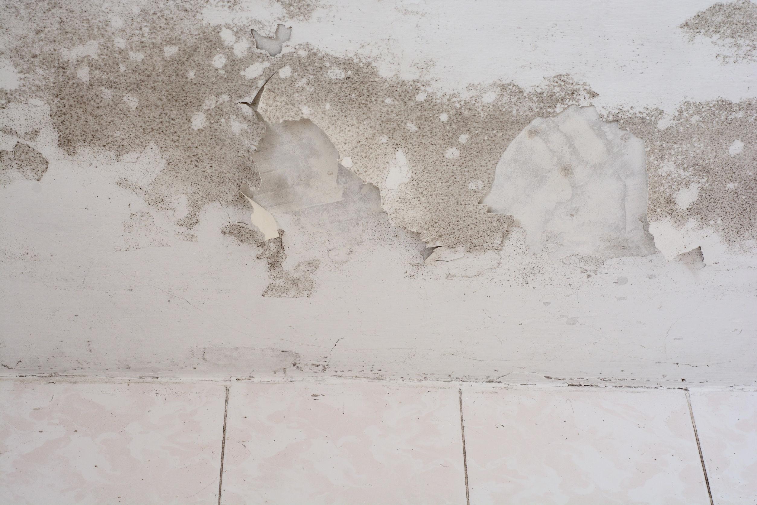 desinfekční odstraňování plísně ze zateplených fasád Plzeň