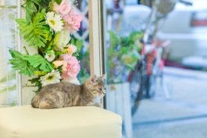 mytí oken a výloh v květinářství