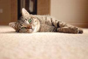 Zápach od koček