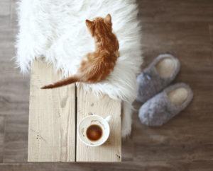 čistý domov- koberec