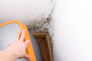 Odstraňování plísní a řas z povrchu fasád