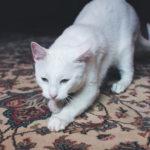 Jakým prostředkem vyčistit koberec