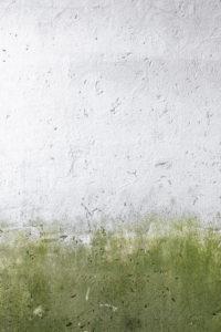 Likvidace a prevence vzniku a množení plísní