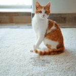domácí mazlíček a koberec