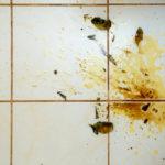 kotoučové mytí podlahy