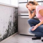 Dezinfekcia plesní bez chlóru