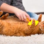 Ako dostať z koberca zvieracie chlpy