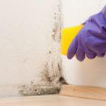 Likvidace plísní chemický roztok