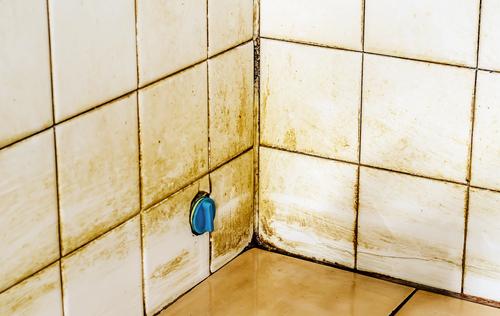 Plísně v bytě Praha