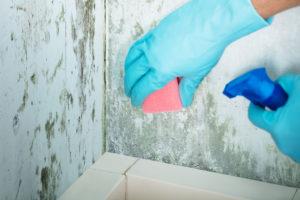 postup při čištění plísní